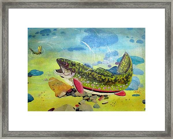 Hungry Trout Framed Print