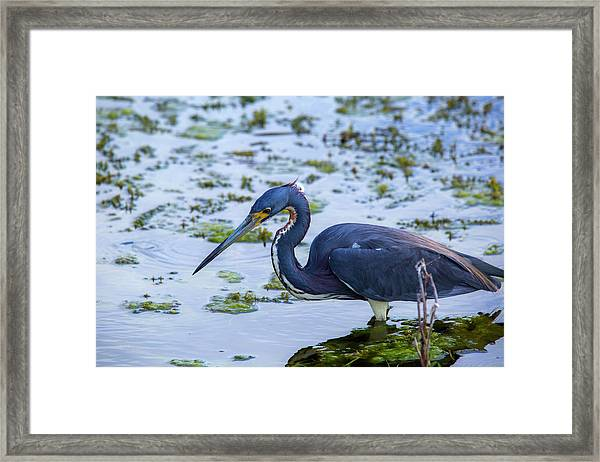 Hunt For Lunch Framed Print