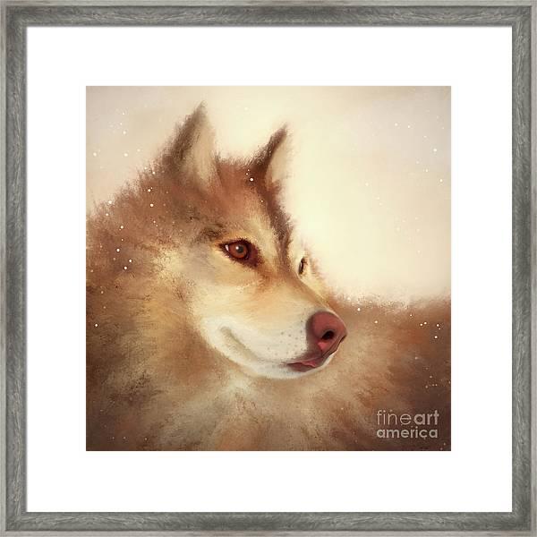 Husky Dog Framed Print