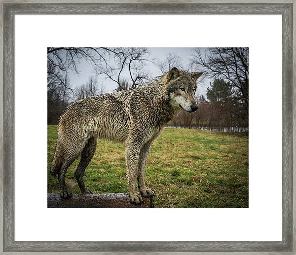 I See It Framed Print