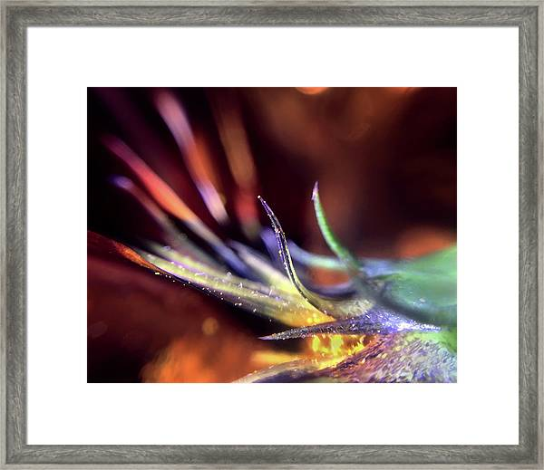 I Was Just As Surprised As You Are Framed Print