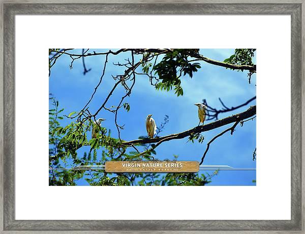 Ibis Perch - Virgin Nature Series Framed Print