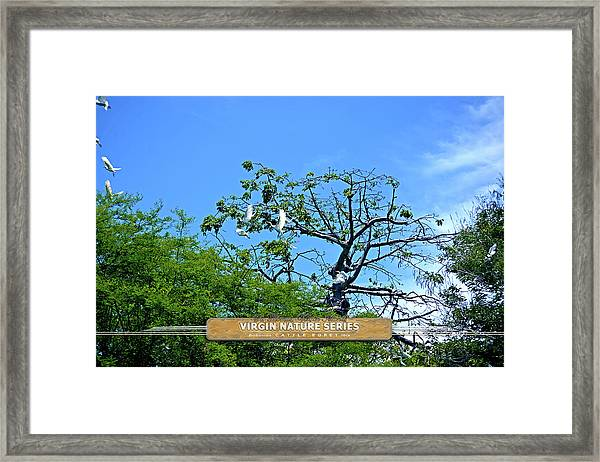 Ibis Risen - Virgin Nature Series Framed Print