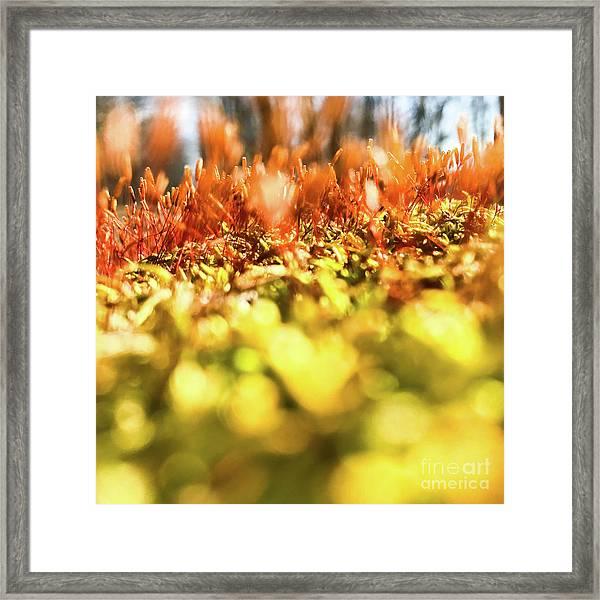 Framed Print featuring the photograph Orange Moss 3 by Atousa Raissyan