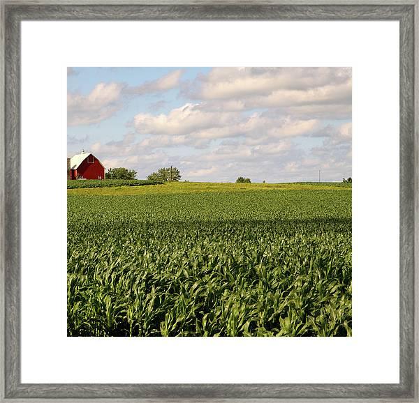 Illinois Corn Field Framed Print