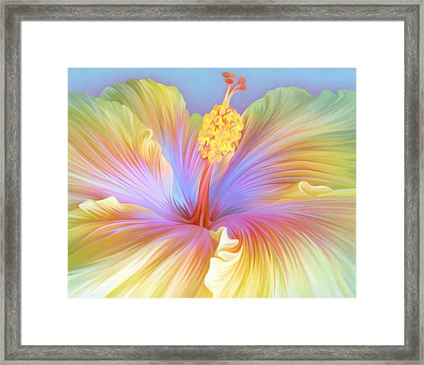 Illustration Of Hibiscus Flower Framed Print by Illustration By Shannon Posedenti