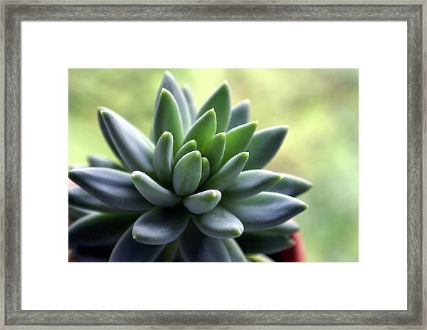 In Focus View Of Green Houseplant With Framed Print by Dorin s