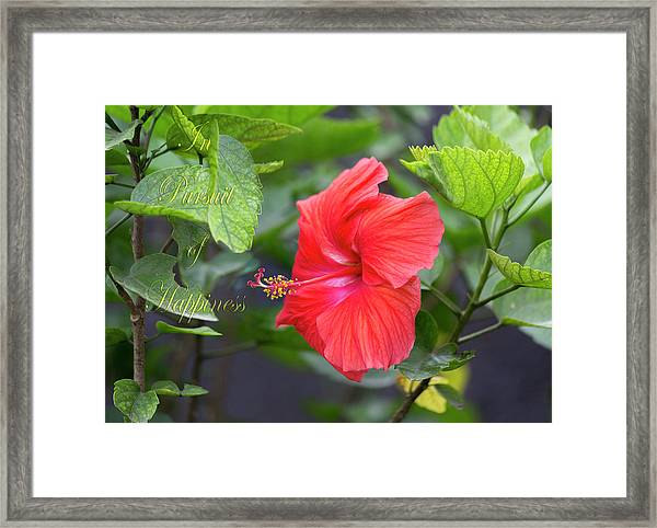 In Pursuit Of Happiness Framed Print