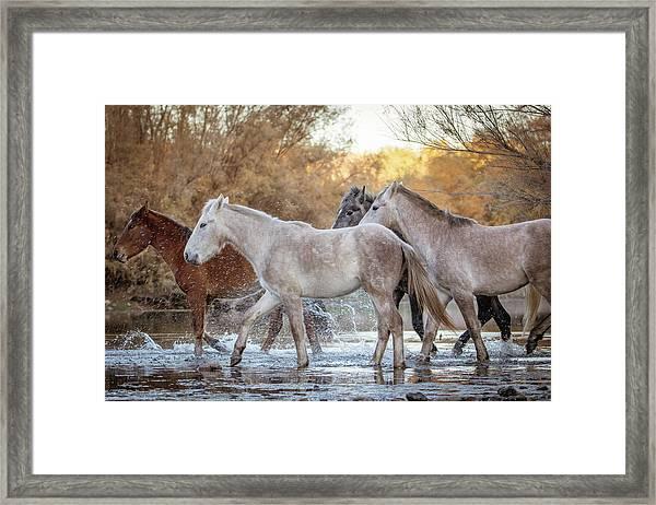 In The River Framed Print