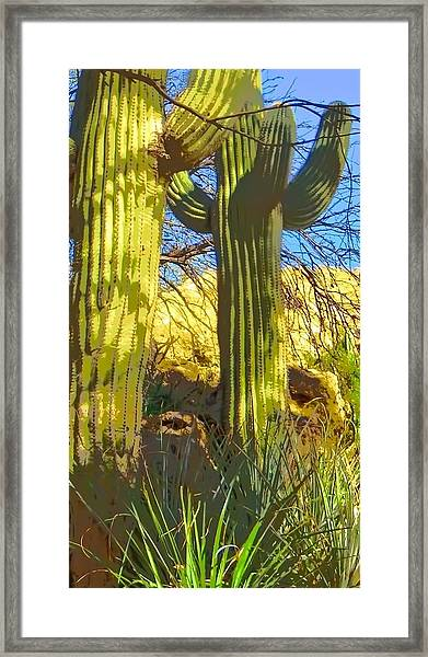 In The Shadow Of Saguaros Framed Print