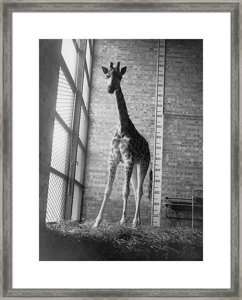 Inch By Inch Framed Print