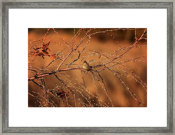 Inhospitable Framed Print