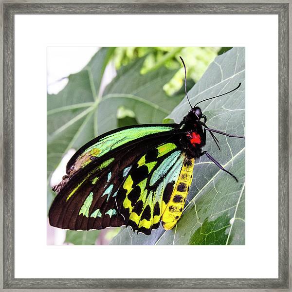 Insect Kaleidescope Framed Print