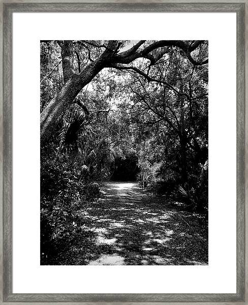 Into The Darkness Framed Print