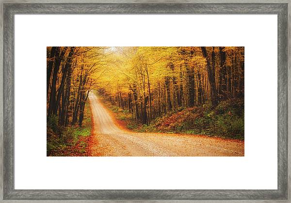 Framed Print featuring the photograph Into The Woods by Bryan Smith