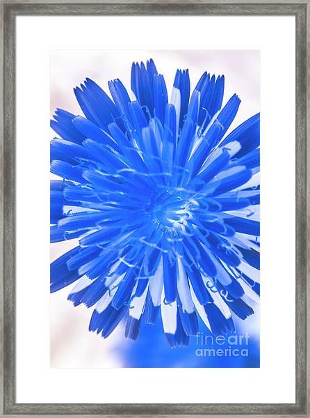 Inverse Flower Art Framed Print