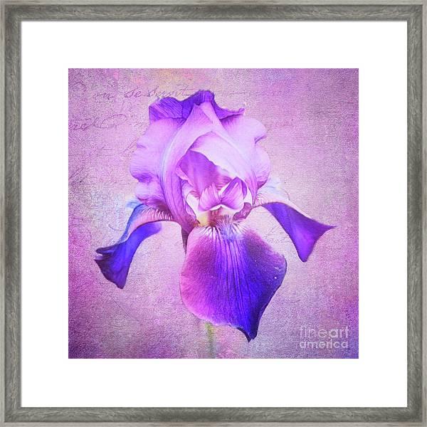 Pretty In Purple Iris Framed Print