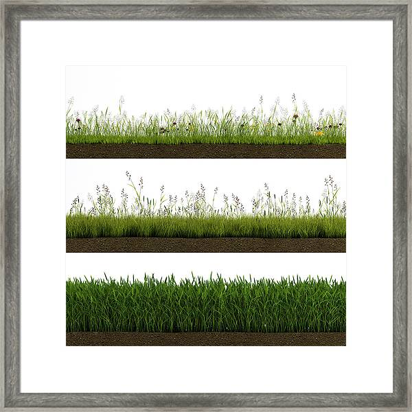 Isolated Grass Framed Print by Ivanwupi
