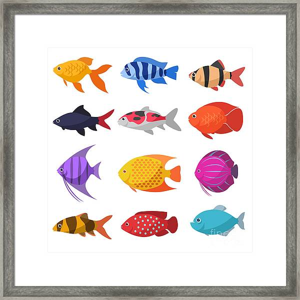 Isolated River Fish. Set Of Freshwater Framed Print