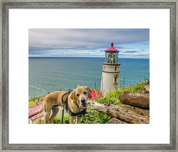 Jackson At Heceta Head Lighthouse Framed Print