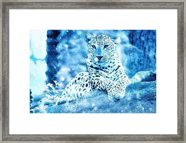 Jaguar, Panther Framed Print