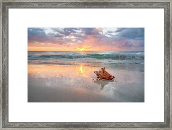 Jamaica, Conch Shell On Beach Framed Print