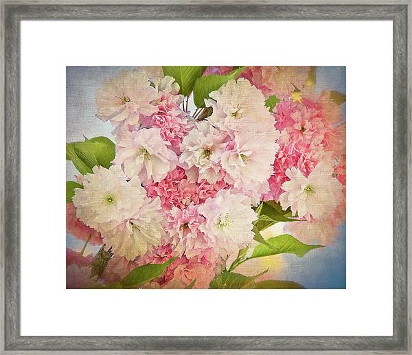 Japanese Cherry Tree  Blossoms Framed Print