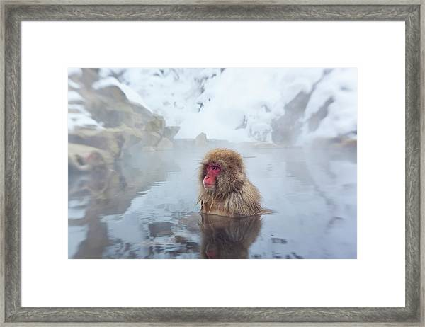 Japanese Macaque Or Snow Monkey, Japan Framed Print