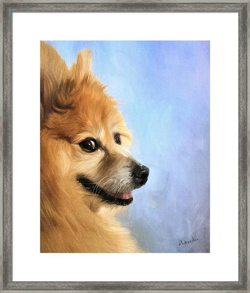 Jayjay Framed Print