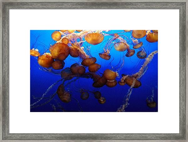 Jellies Framed Print by Shyam Mani