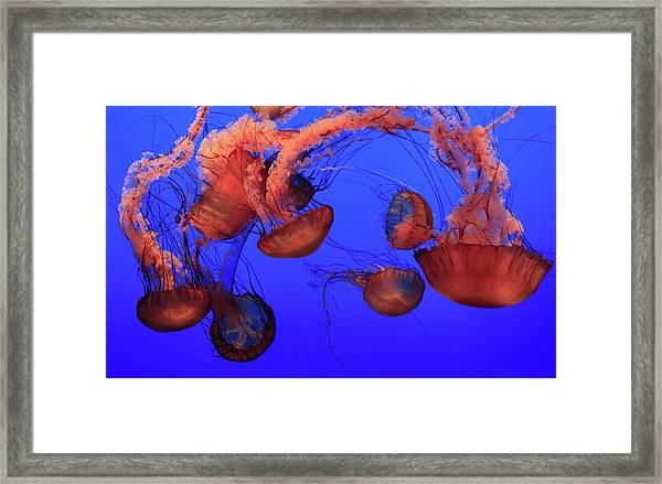Jellyfish Framed Print by Ionut Iordache