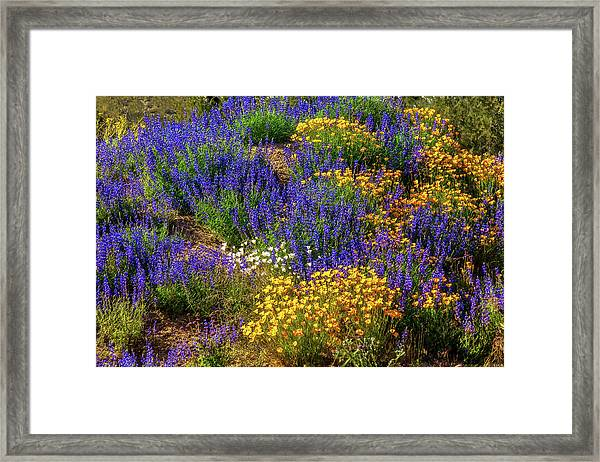 Jewels Of The Desert Framed Print