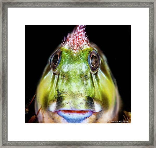 Jiminy Cricket Framed Print
