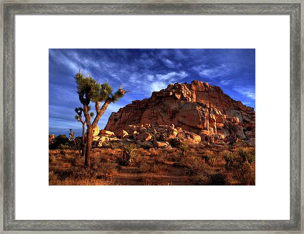 Joshua Tree And Rock Pile Framed Print