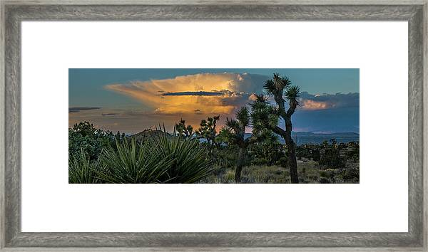 Joshua Tree Thunder Framed Print