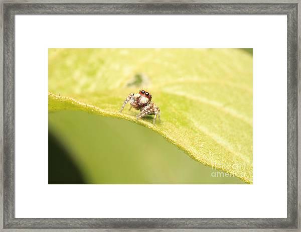 Jumber Framed Print
