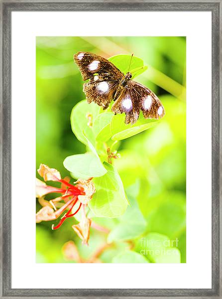 Jungle Bug Framed Print