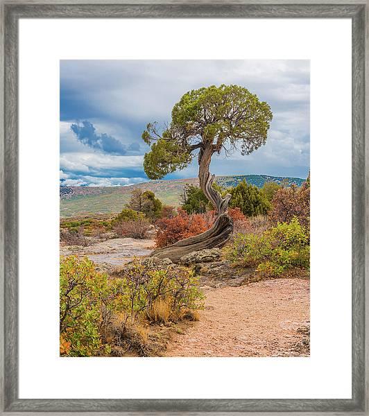 Juniper At Dragon Point Framed Print
