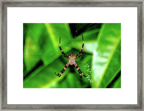 Just Hanging Framed Print