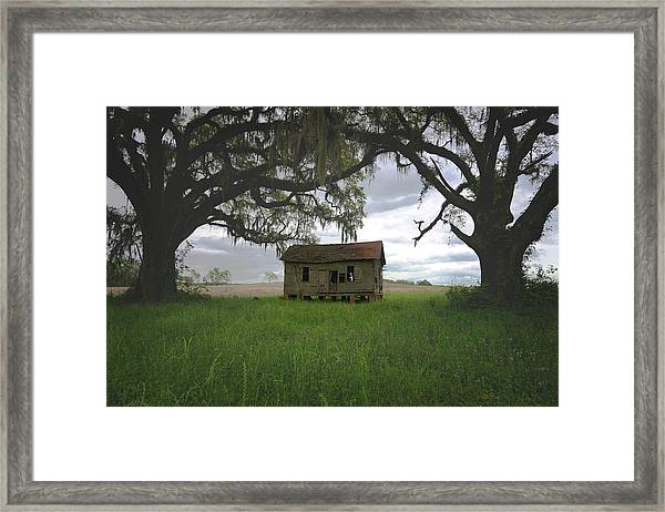 Just Me And The Trees Framed Print