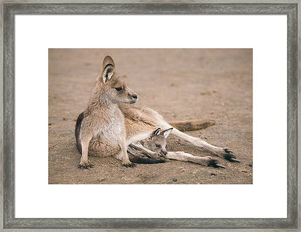 Framed Print featuring the photograph Kangaroo Outside by Rob D Imagery