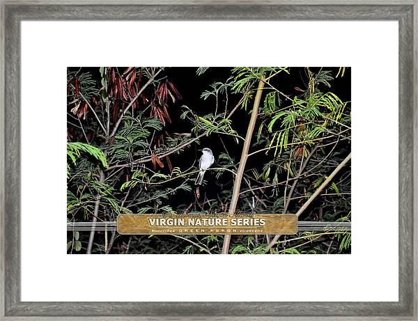 Kingbird In Casha - Virgin Nature Series Framed Print