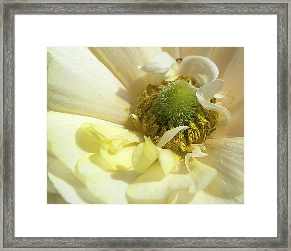 Kissed By Gold Framed Print