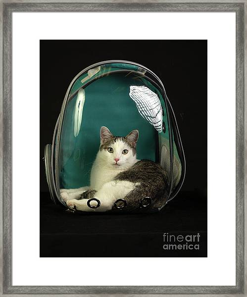 Kitty In A Bubble Framed Print