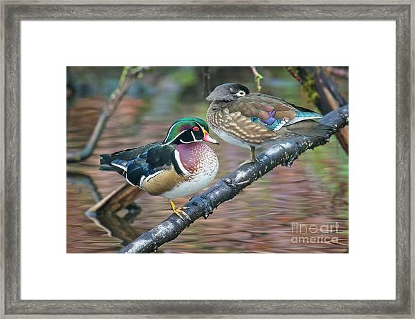 Kodachrome Ducks Framed Print