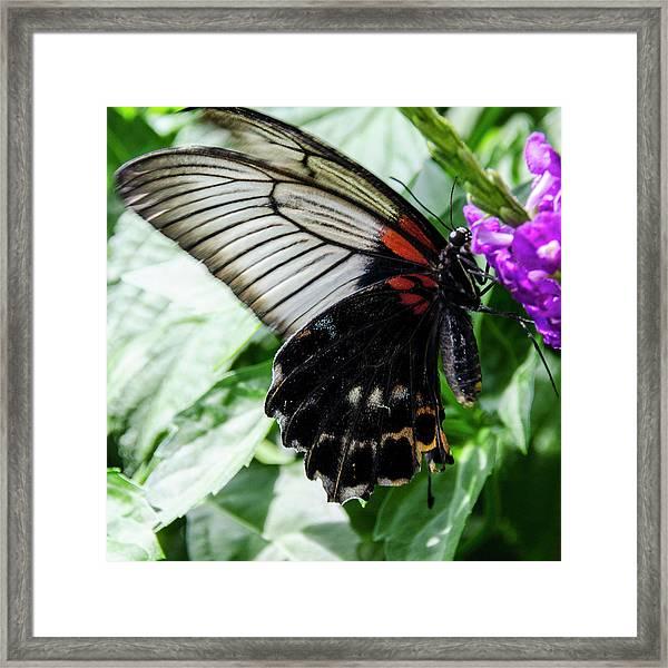 Lacey Elegance Framed Print