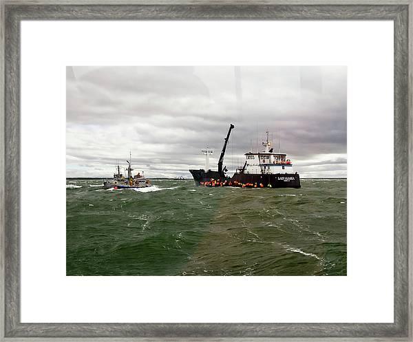 Lady Alaska Framed Print