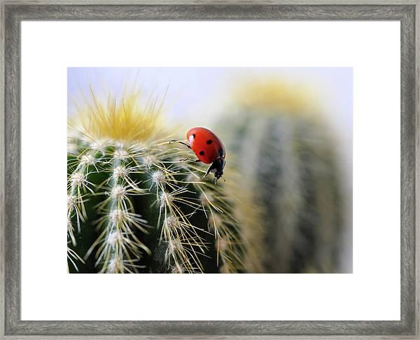 Ladybug On Cactus Framed Print