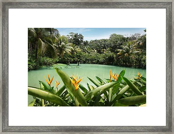Lagoon At Cranbrook Flower Forest Framed Print