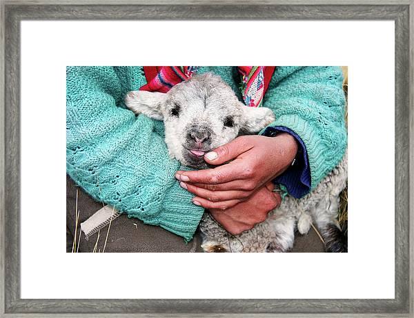 Lamb Sitting On Shepherd-girls Lap Framed Print by Uros Ravbar
